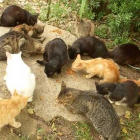 gatti-randagi-monterubiaglio